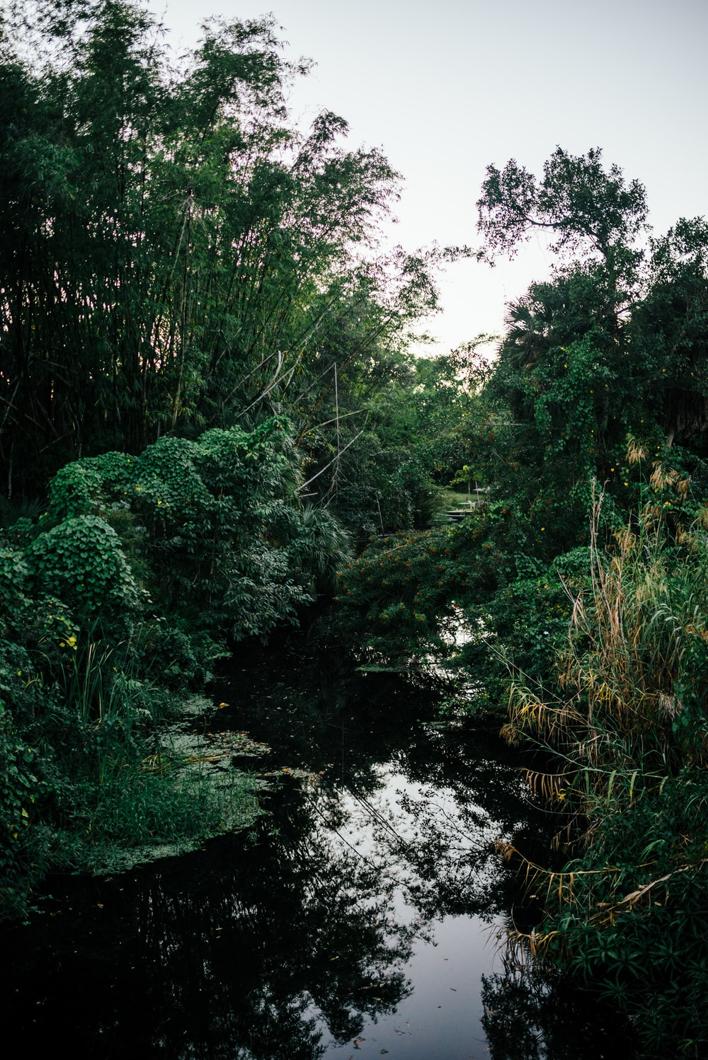 body of water between trees and plants