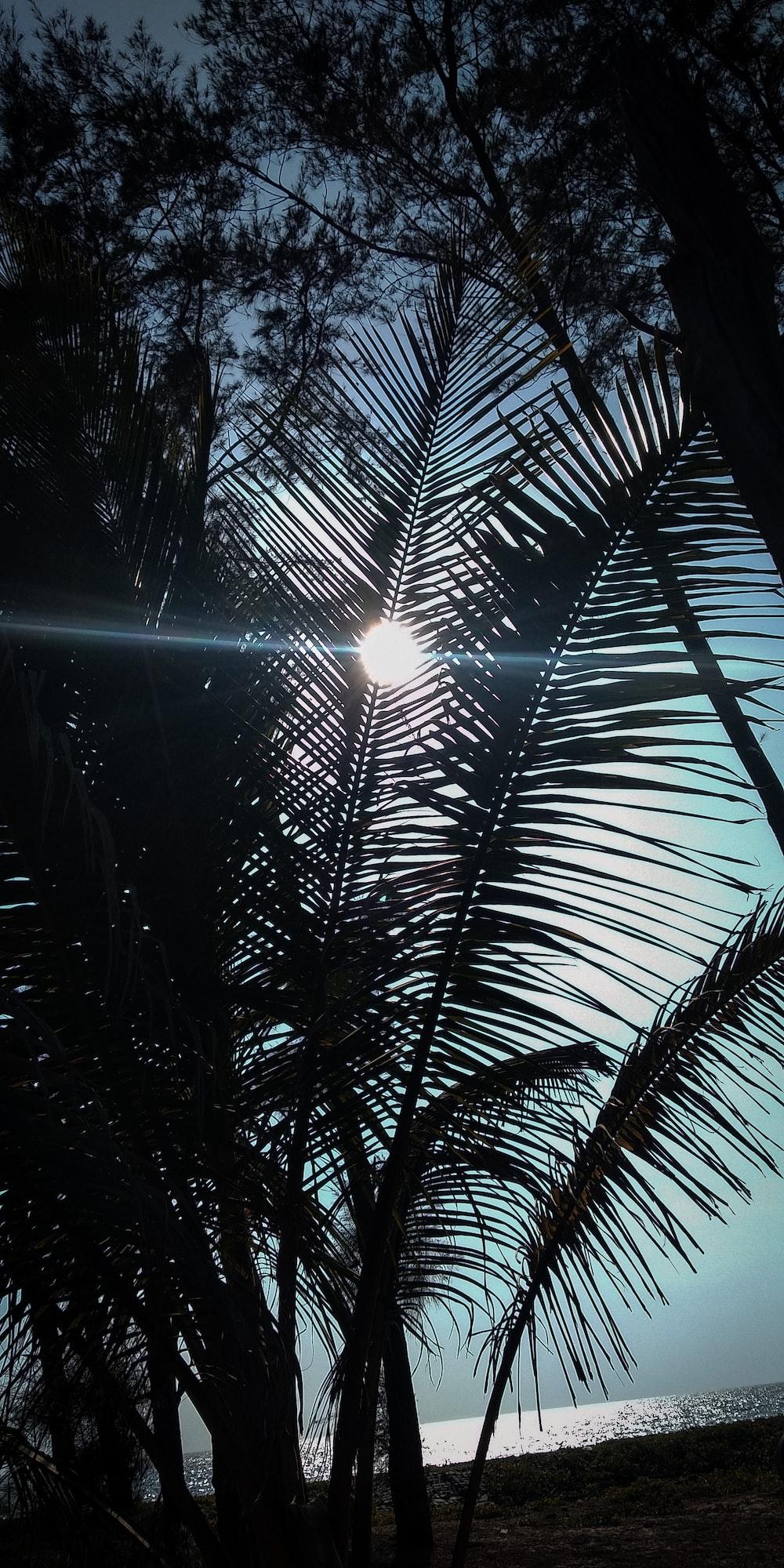 low-angle photography coconut tree
