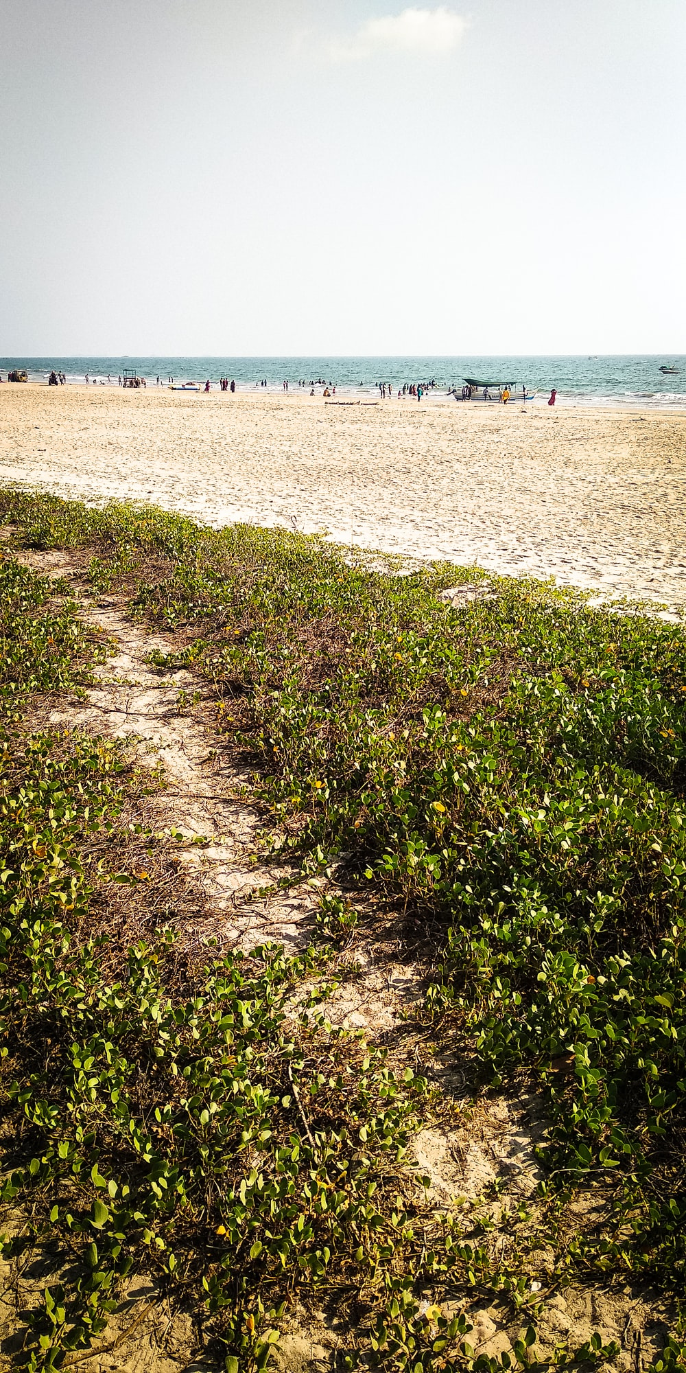green grass near shore and sea during daytime