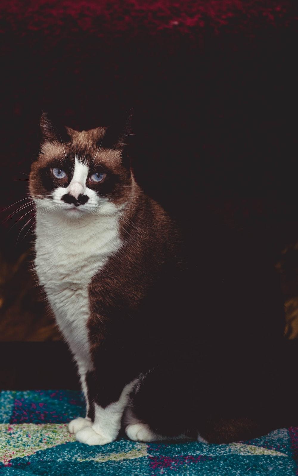 black and whiteTuxedo cat