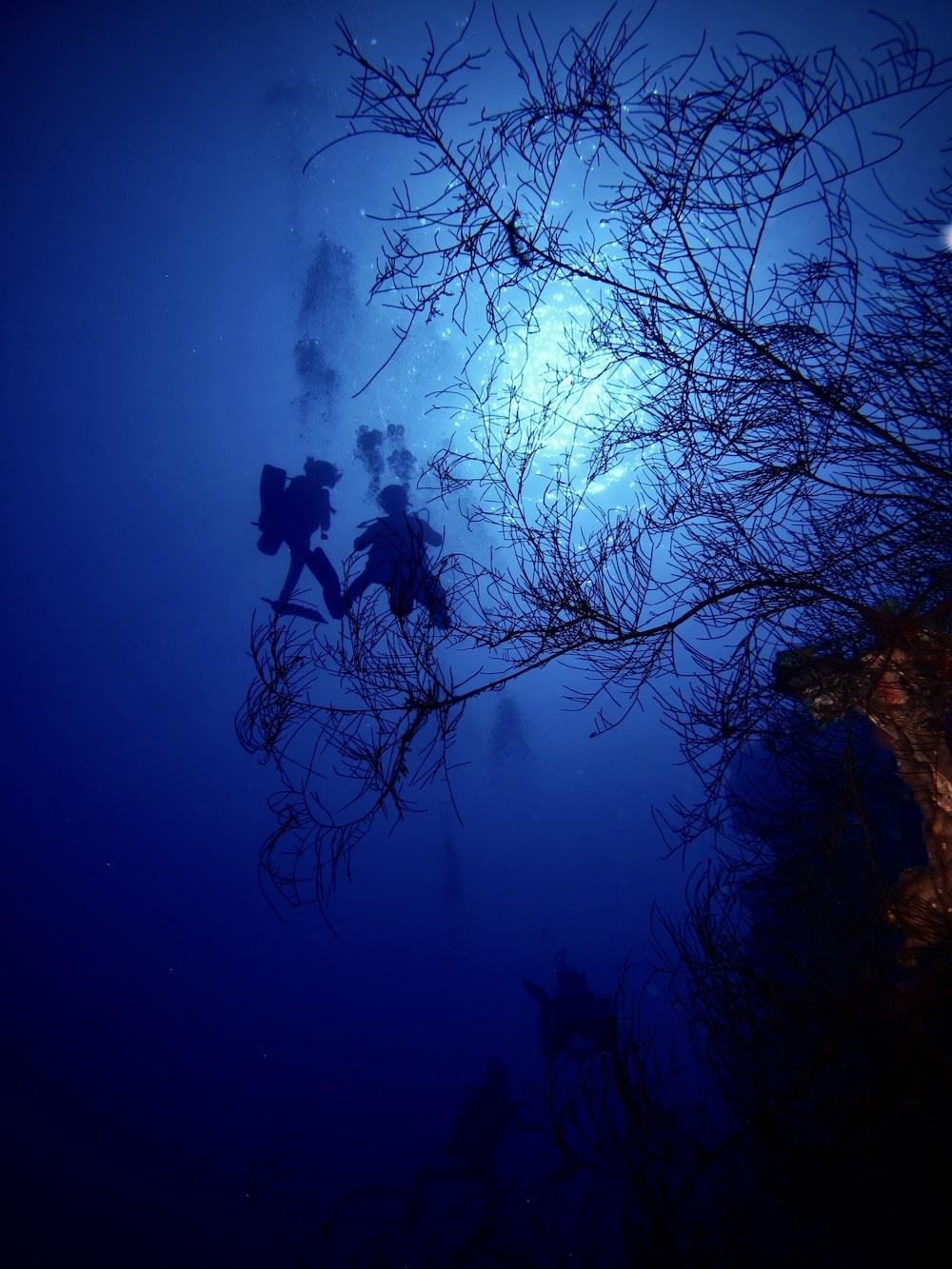 silhouette of scuba diving