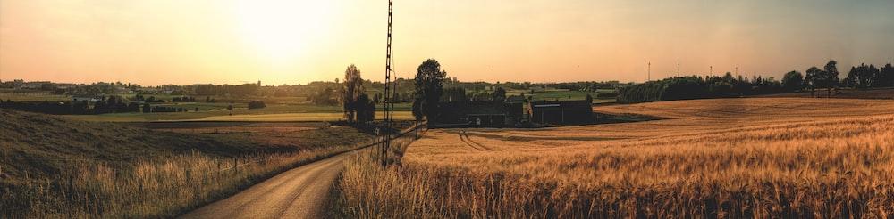 field under golden hour