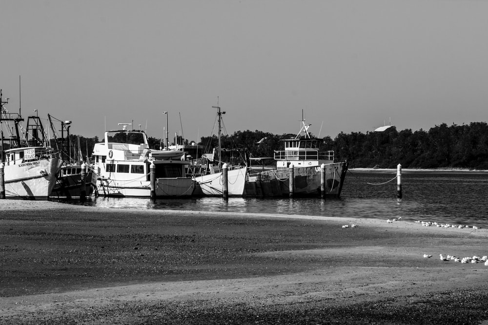 grayscale photography of boats on body of water viewing trees