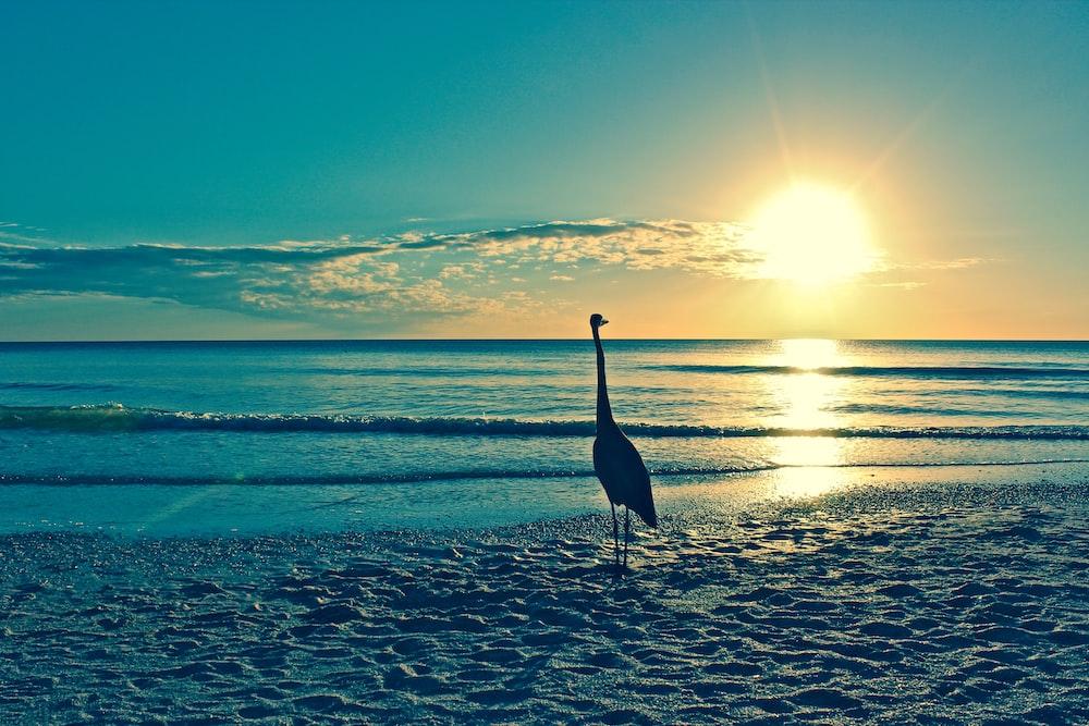 bird on sand during golden hour