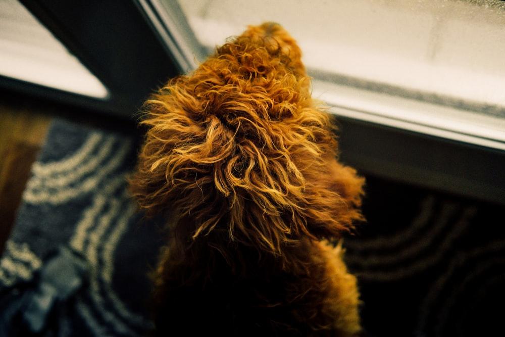 brown dog near wall
