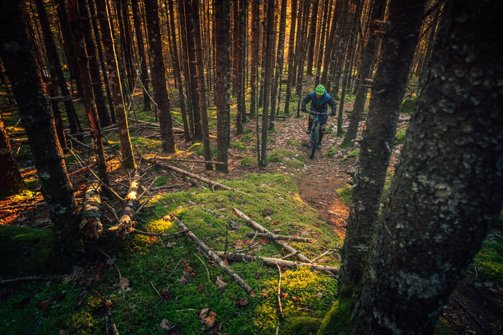 person riding mountain bike on forest