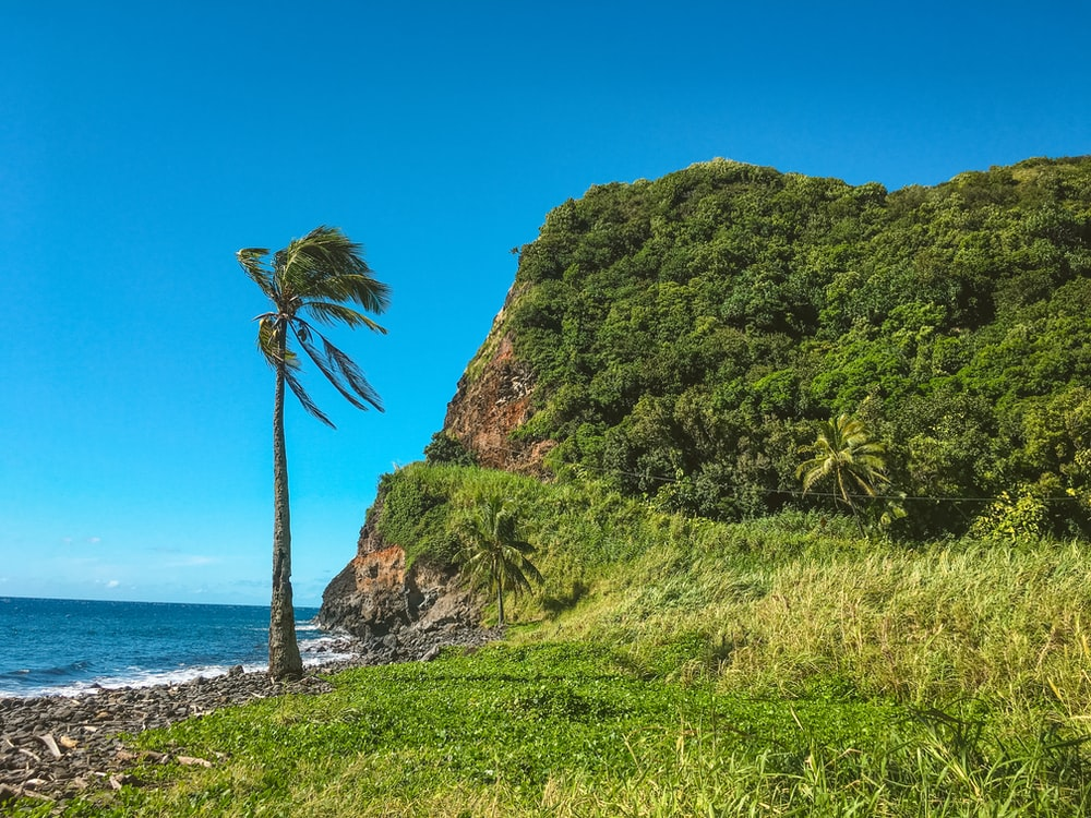 green coconut tree viewing cliff and blue body of water under blue and white sky