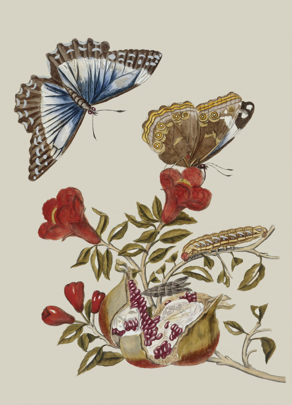 brown moth perch on red flower painting
