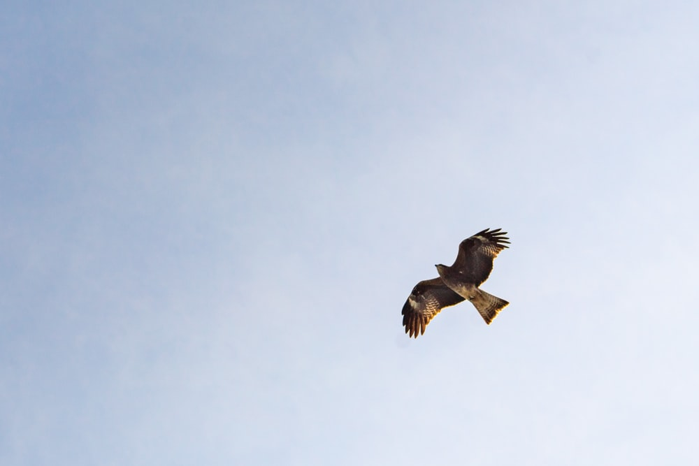 brown bird on mid air