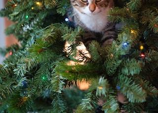 grey cat in Christmas tree