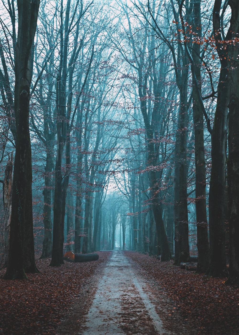 bare trees beside road