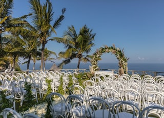 green palm tree and white chairs
