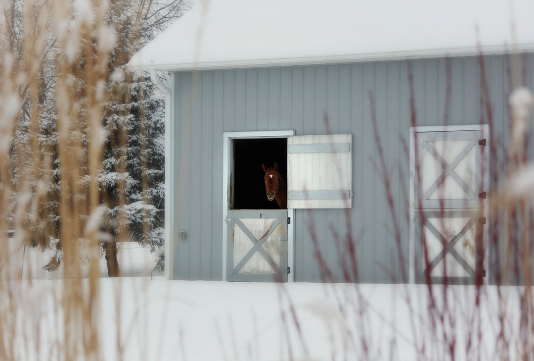 A horse looks out of a barn window during the winter.