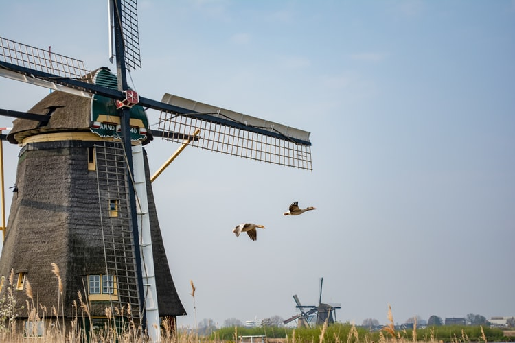 Wind mill with goose flying by