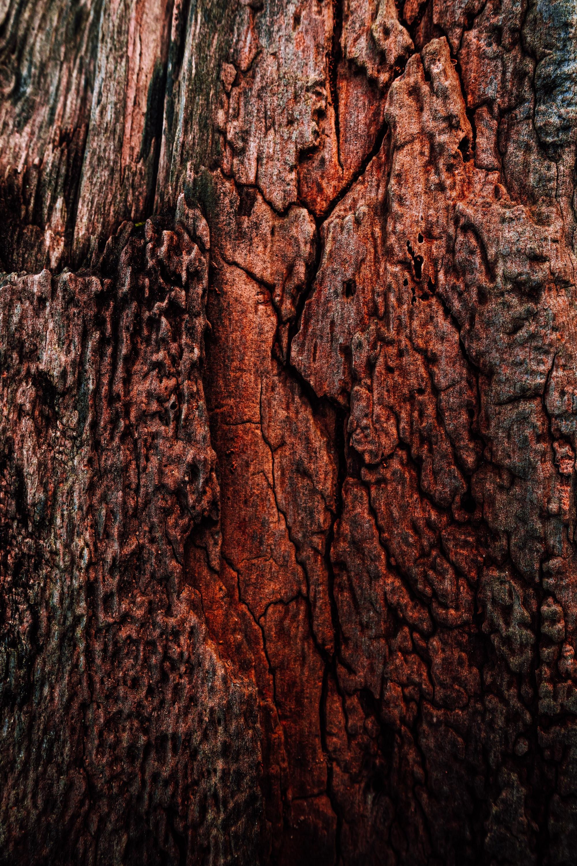 Wahlkreis Wangen erhält 550.000 Euro zur Förderung innovativer Modellvorhaben im Holzbau