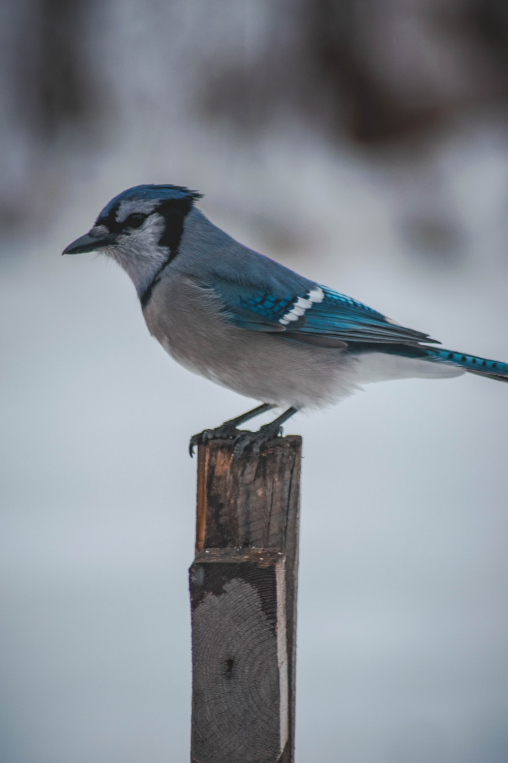 blue and gray bird on wood