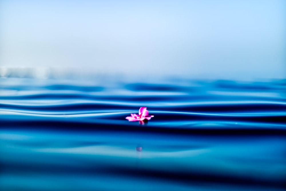 pink petal on body of water
