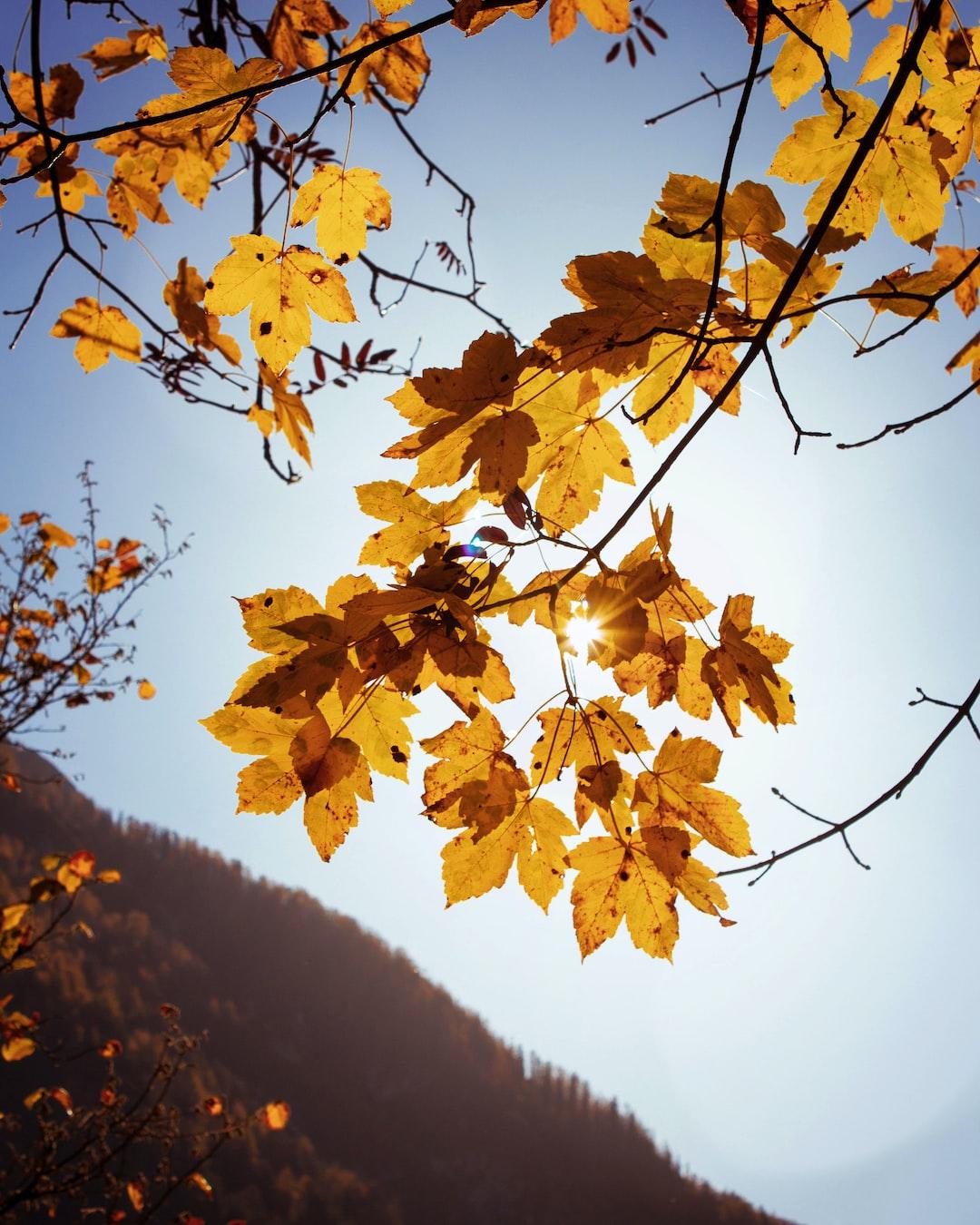 Le foglie in autunno sono belle