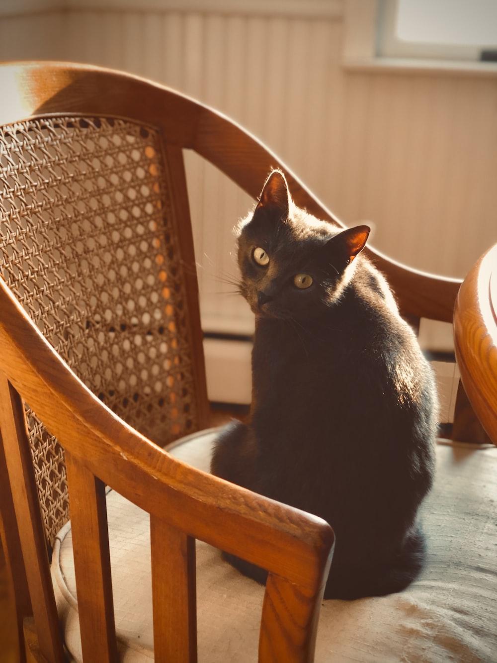 short-fur black cat on brown armchair