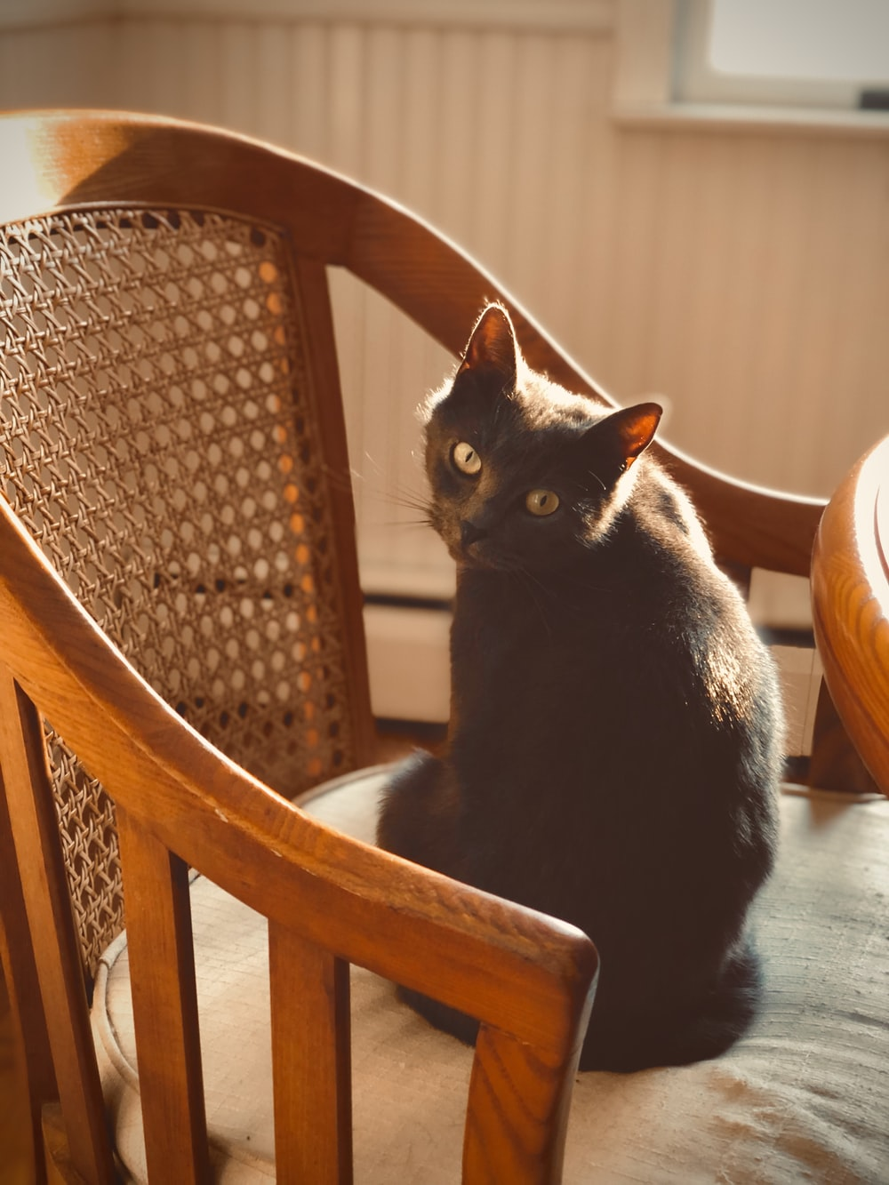 short-fur black cat on brown armchair
