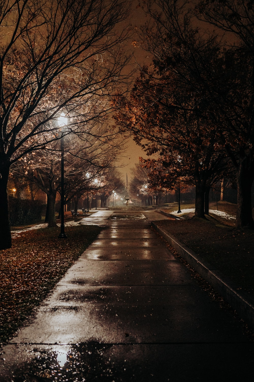 concrete road between trees during nighttime