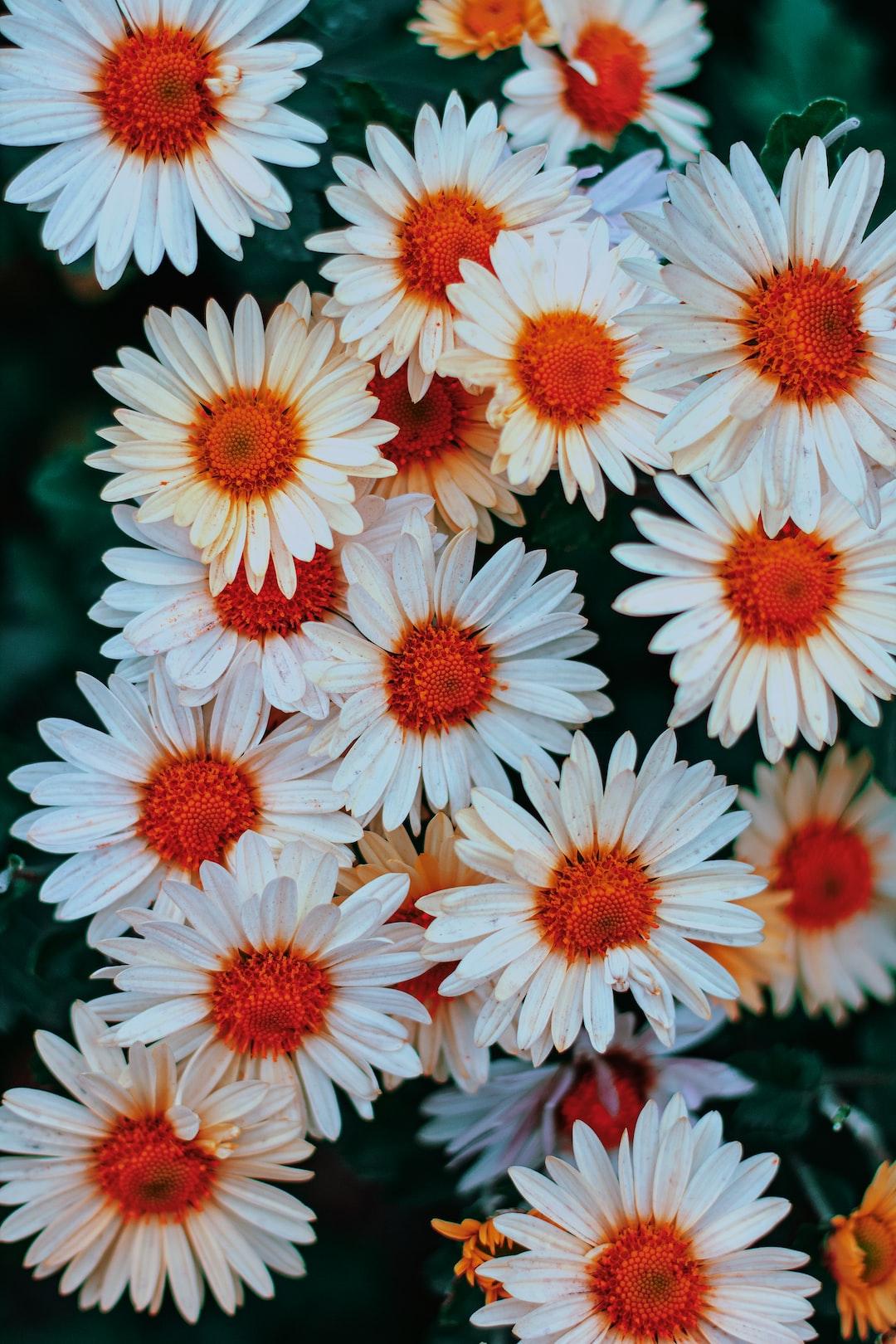 3984. Virágok