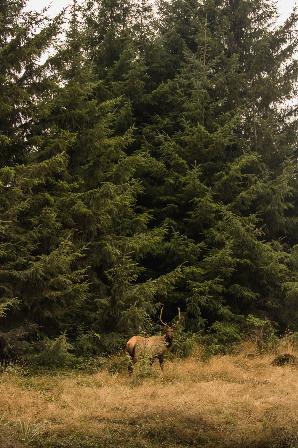 deer near trees during day