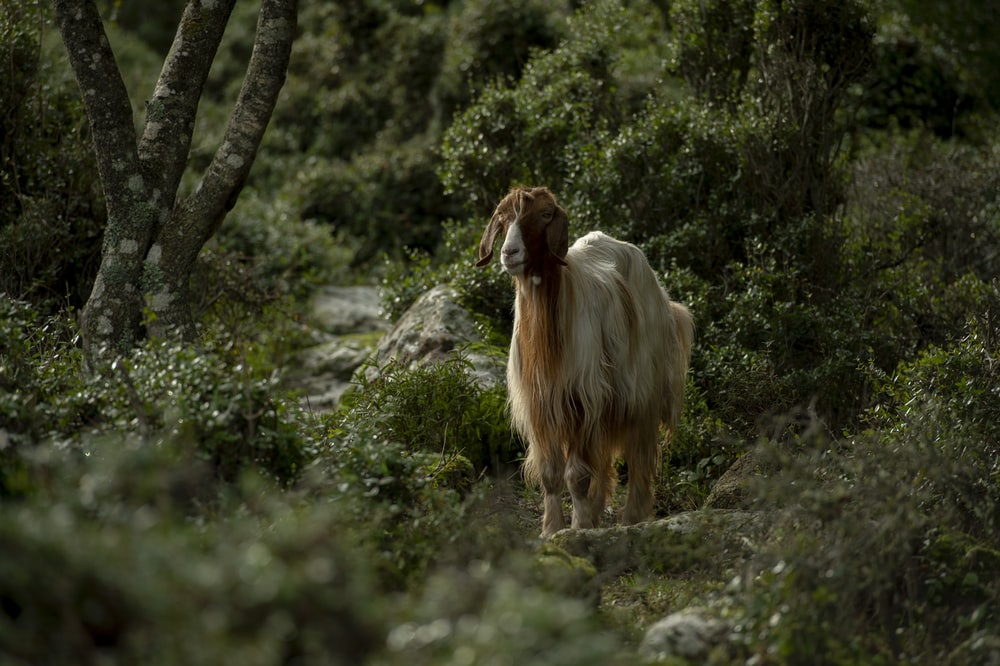 white and brown 4-legged animal on forest