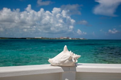 white conch shell bermuda zoom background