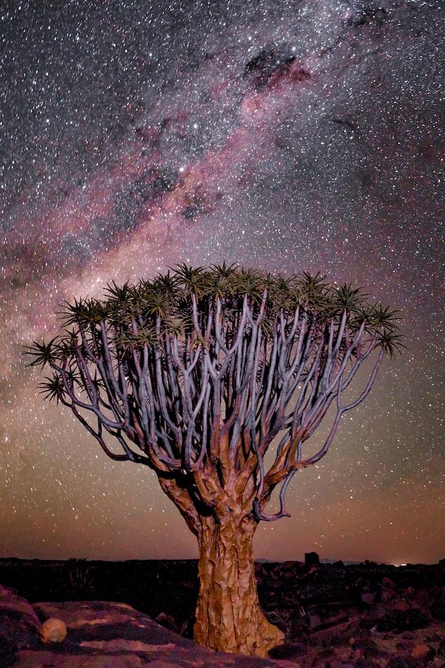Звёздное небо и космос в картинках - Страница 10 Photo-1575677753169-cff039a42afa?ixid=MnwxMjA3fDB8MHxwaG90by1wYWdlfHx8fGVufDB8fHx8&ixlib=rb-1.2
