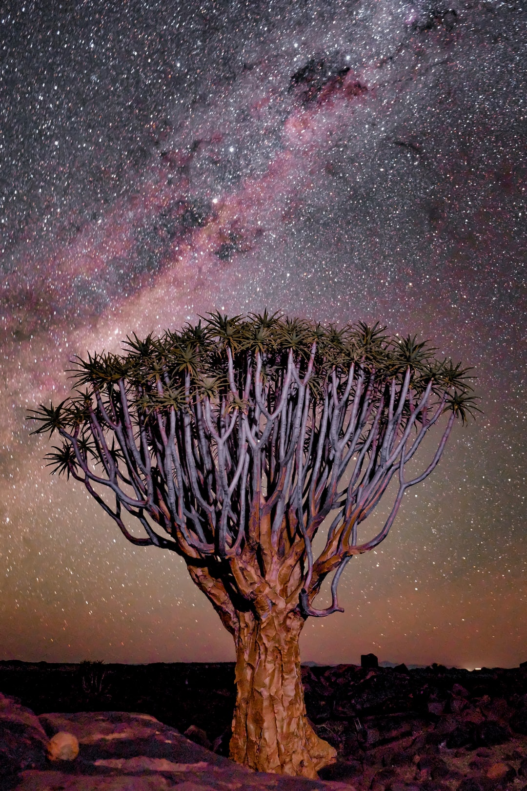 Follow my Instagram @harry.digital .Quiver Tree at Mesosaurus Camp in Namibia