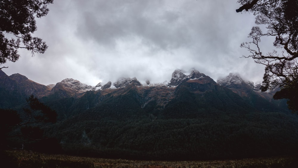 mountains and forest during day