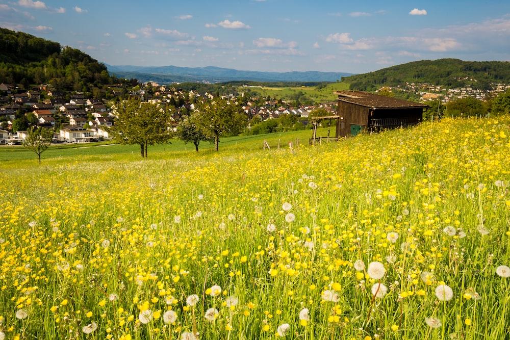 flower field by hut during daytime