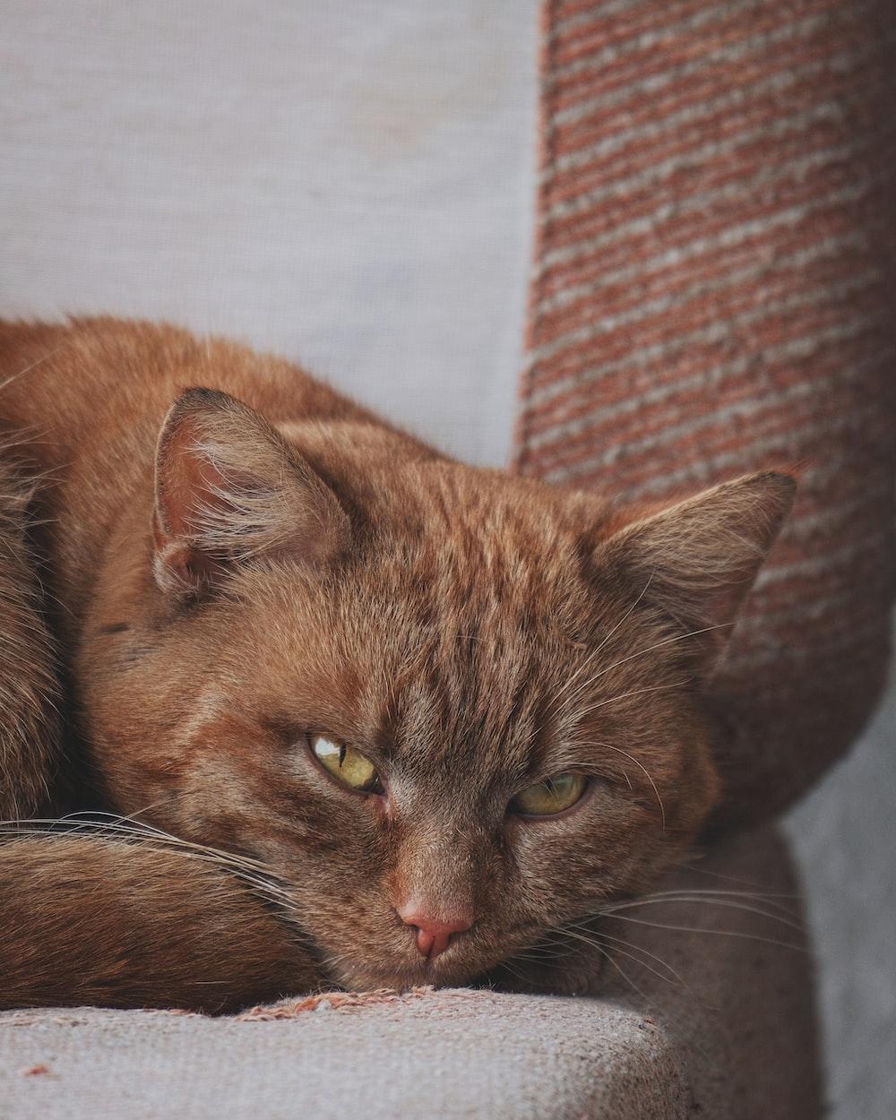 orange cat lying on white textile