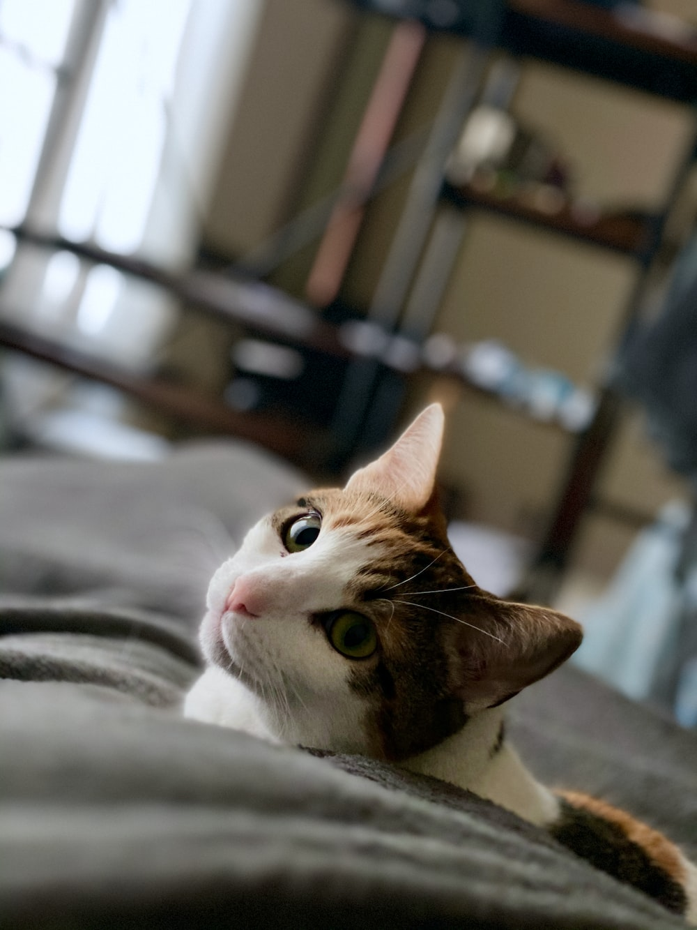 closeup photo of short-fur white and brown cat lying on bed