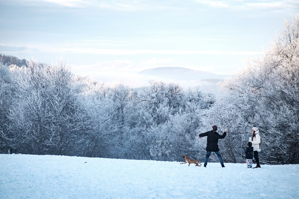 dog, man, child, and woman on snow field near trees during day