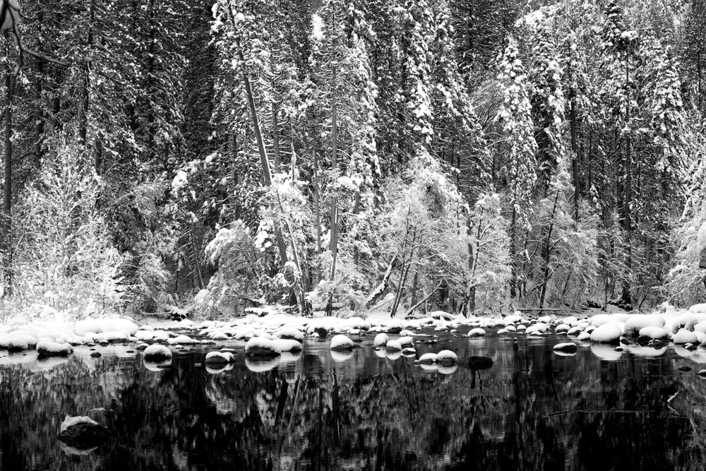 grayscale photo of reflection of trees on water