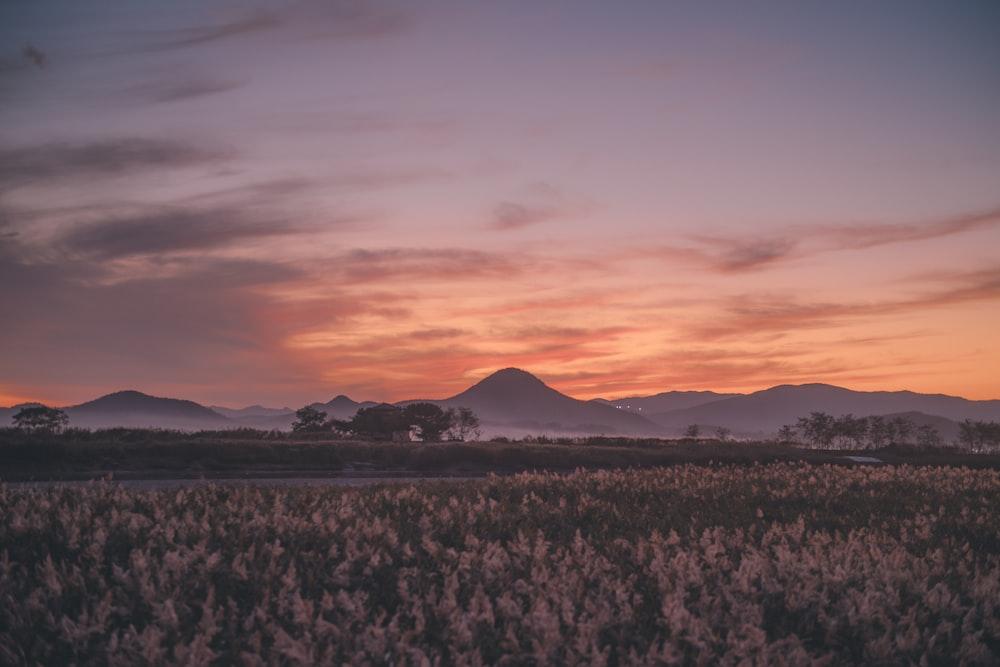 golden hour above fields