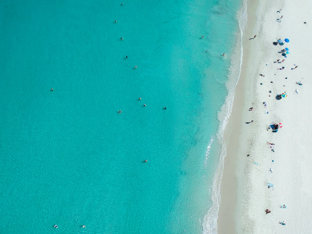 aerial photography of people on beach during daytime