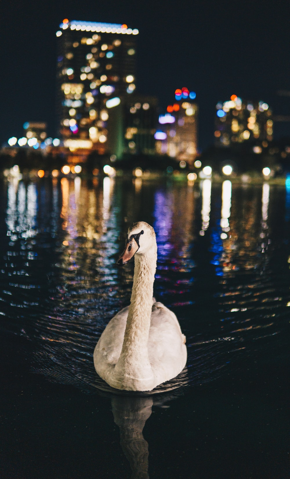 white duck floating on body of water near the city during night