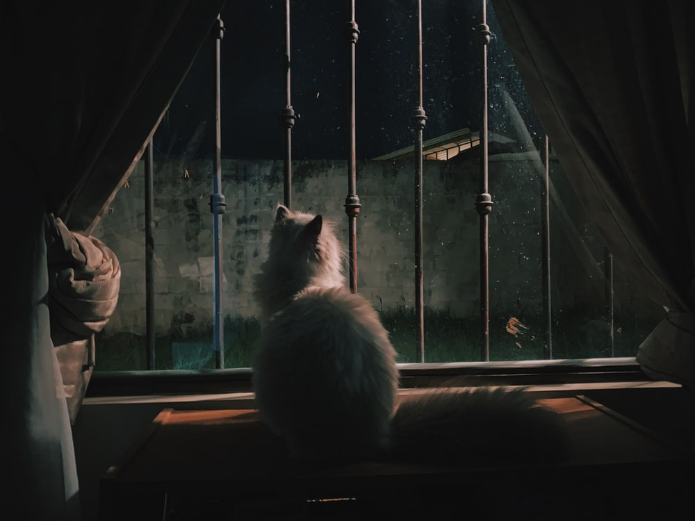 cat on window