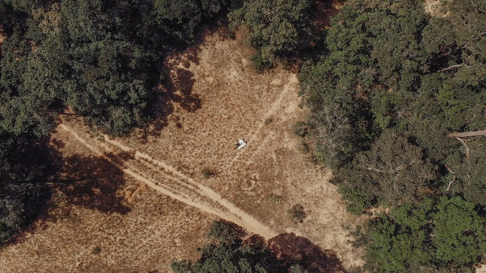 areal photo on land near trees