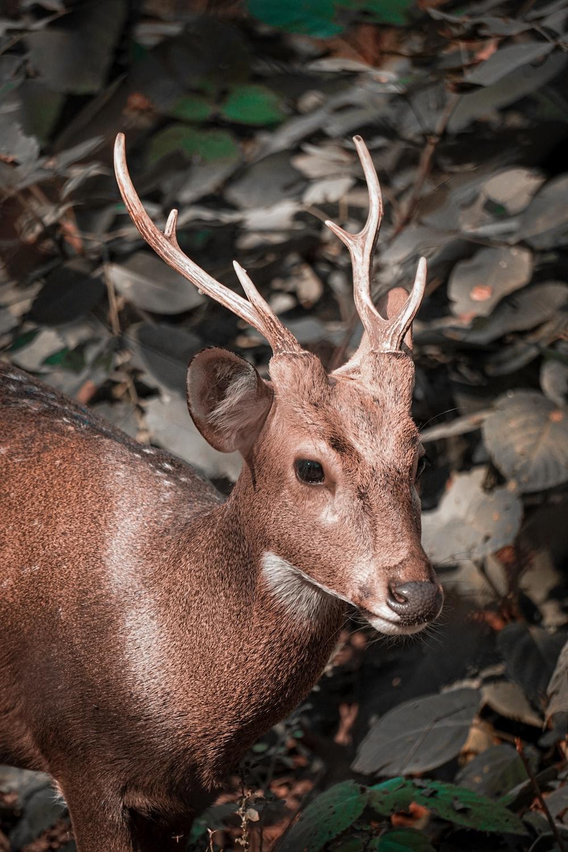 brown deer near plants