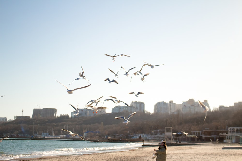 person standing on seashore looking up on flying birds