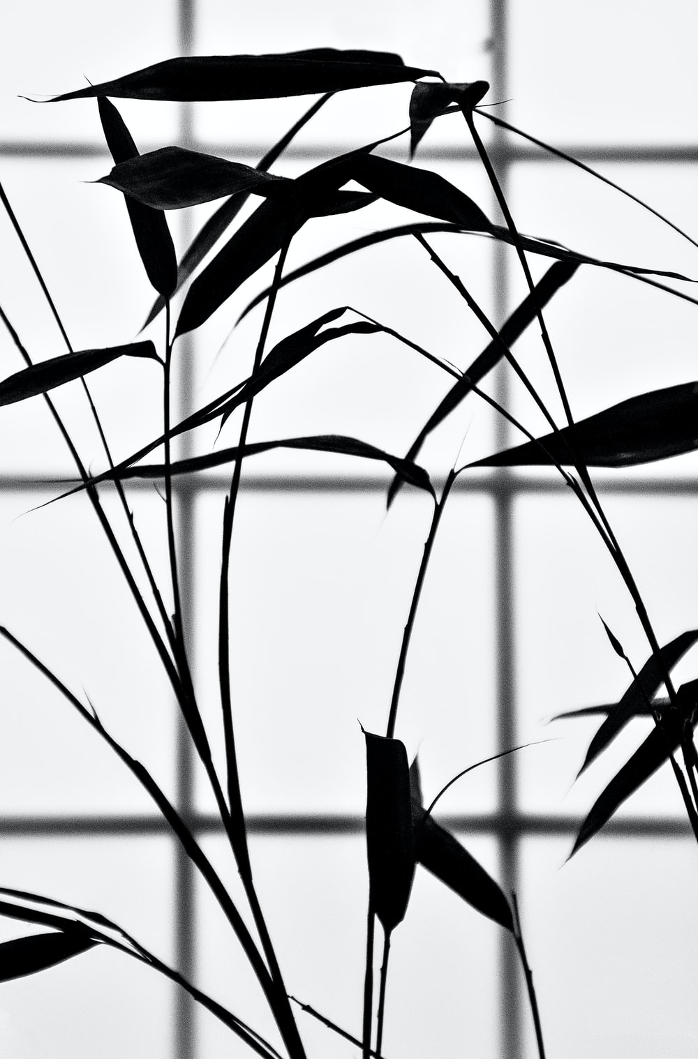 silhouette of plants