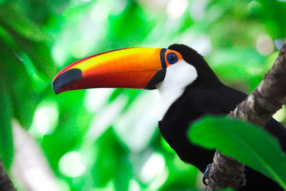 toucan bird on branch