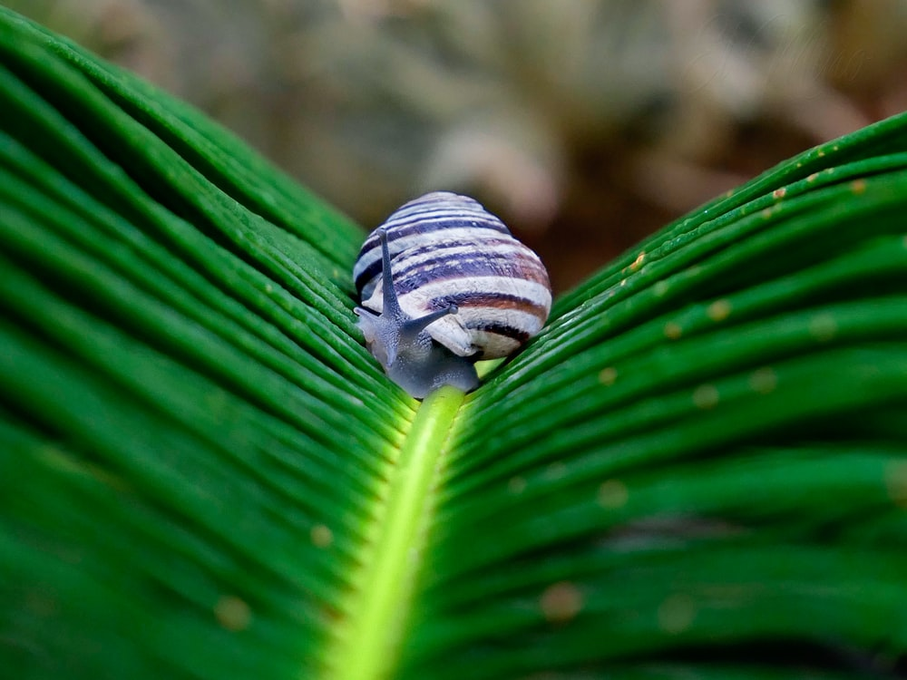 white and brown snail on palm leaf