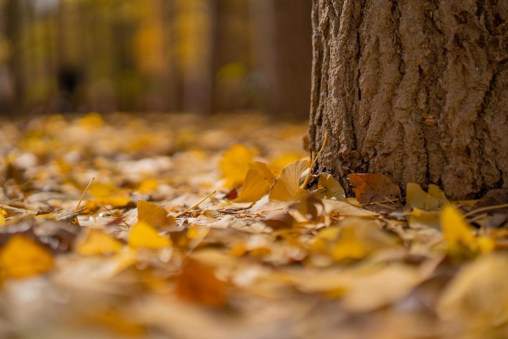 yellow leaves below tree