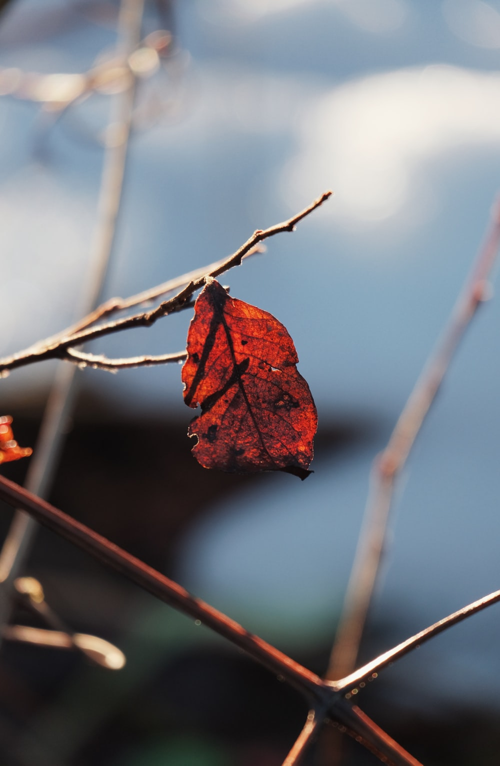 selective focus photography of brown leafed tree
