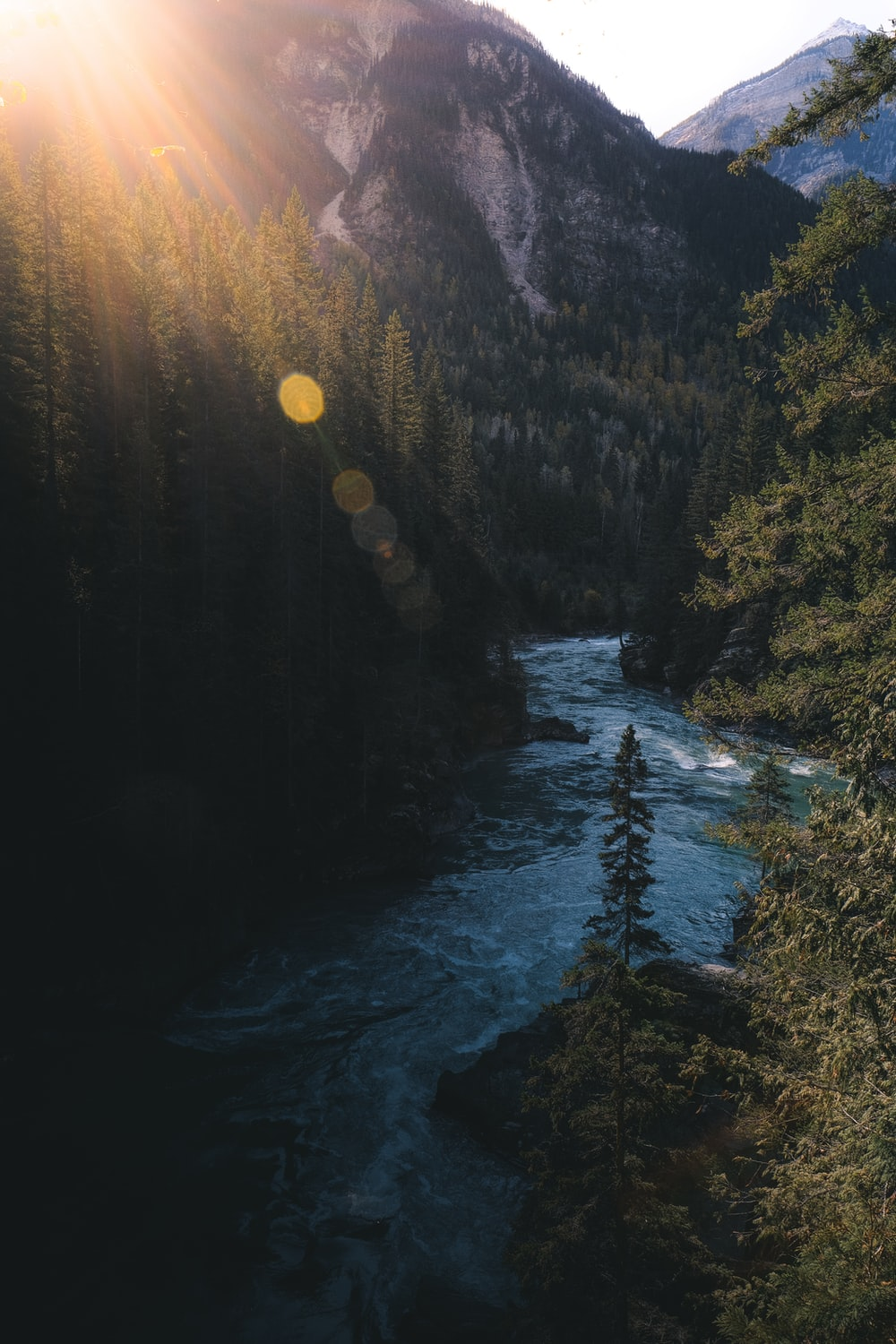 pine trees and river